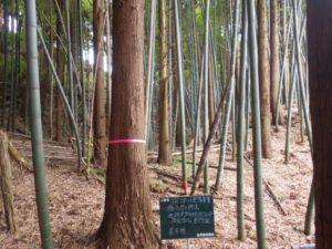 伐採現場1