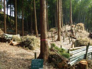 伐採現場1 残材