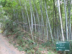 伐採現場2