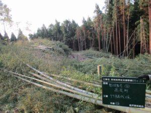 竹伐採現場2 竹残材