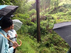 竹伐採地視察